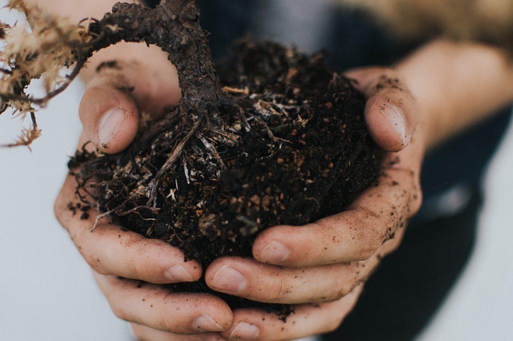 Biochar for soil health
